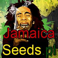 marihuana, thc, cbd, cannabis, informacje, artykuły, newsy