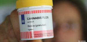 cannabis-bedica-granulat-medycyna-mediweed-1