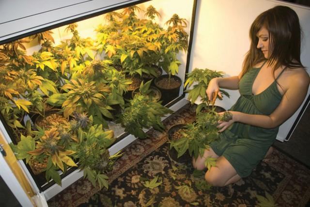 Cannabis sprawi, że będziesz piękna., JamaicaSeeds.pl