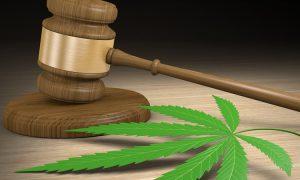Bawaria w Niemczech: pacjent musi iść do więzienia za posiadanie 23 roślin cannabisu, JamaicaSeeds.pl