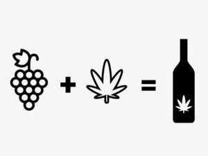 Wino z cannabisu, JamaicaSeeds.pl