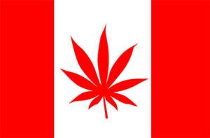 Basista zespołu KISS, Gene Simmons wkracza w biznes cannabisowy, JamaicaSeeds.pl