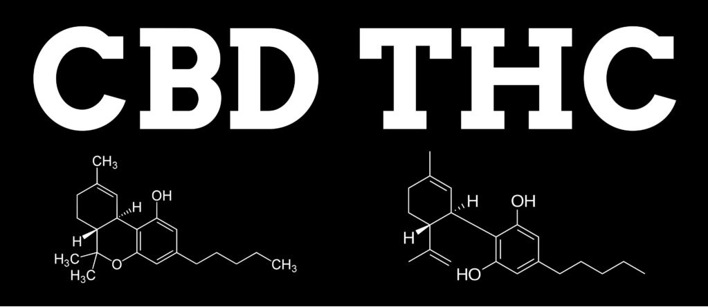 Różnica między THC a CBD, JamaicaSeeds.pl