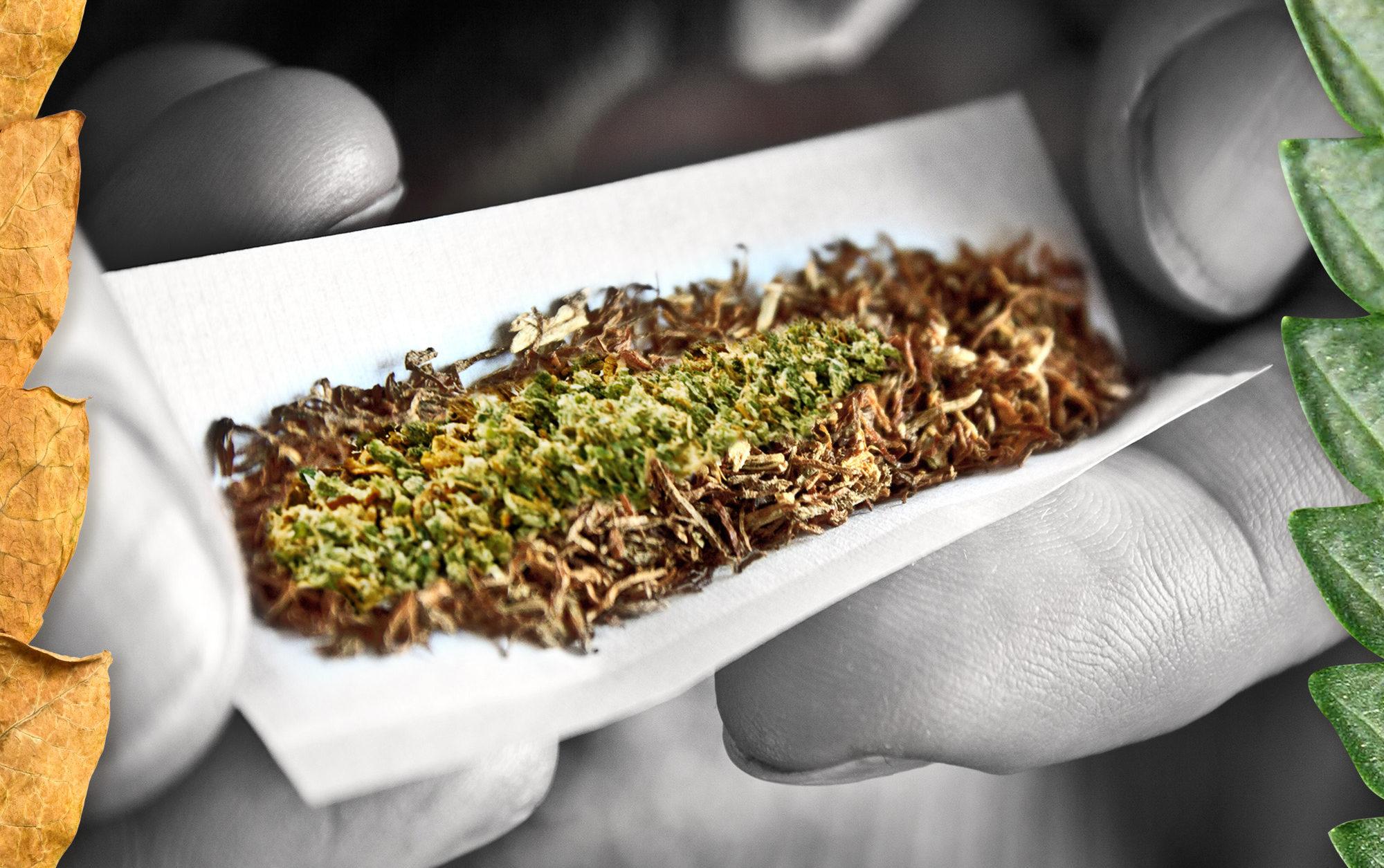 Palaczom Marihuany Trudniej Jest Rzucić Palenie Tytoniu, JamaicaSeeds.pl