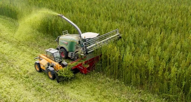 Drezno: HempCo Planuje Największą Farmę Konopną w Europie, JamaicaSeeds.pl